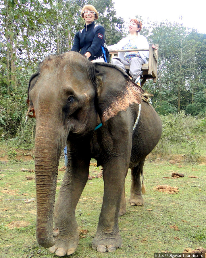 На небольшой полянке, где слонам сделали остановку, чтобы основательно подкрепиться сочными зелеными листьями, осторожно перебралась на шею Хамли, которую доверил мне Пен