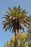 Пальмы тут на каждом углу