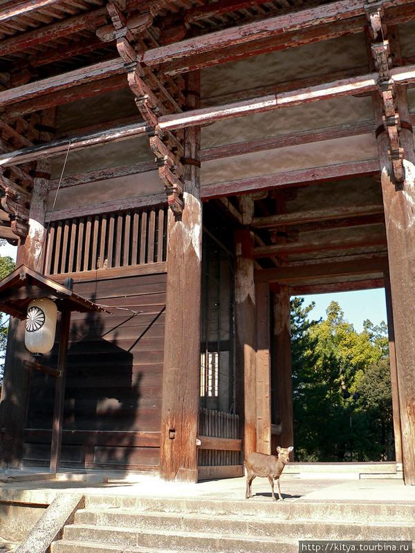 Олень в воротах храма Тодайдзи