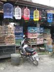 Маланг — на птичьем рынке