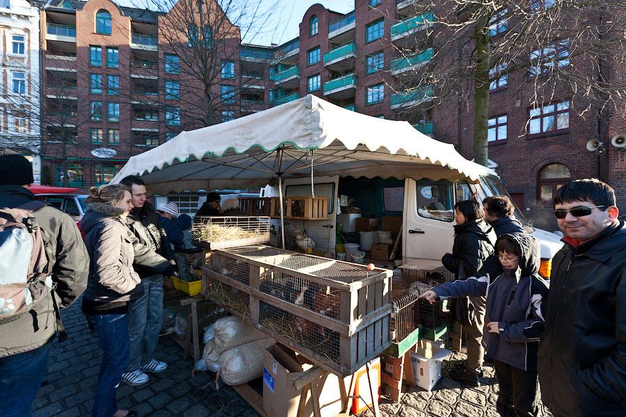 Кроме рыбы и фруктов на рынке время от времени появляются вагончики с животными. Тут можно купить настоящуу, живую курицу или кролика, выпустить им кишки, зажарить и съесть. Шутка.