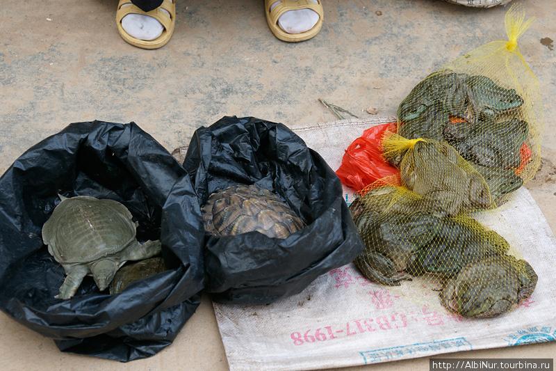 Мы так и не поняли, китайцы покупают этих черепах и лягушек для еды или каких других целей.