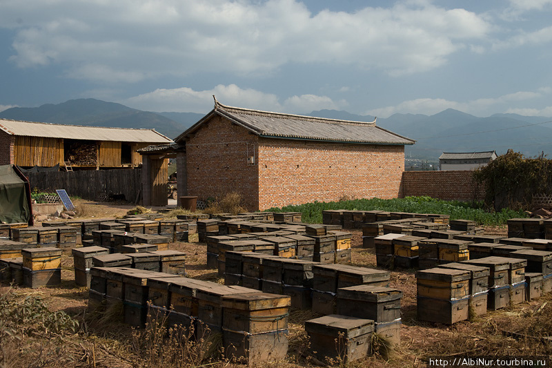 Вдоль дороги множество пасек, на них мы обычно и отоваривались неочищенным медом, в котором плавают личинки и мухи — китайцы не заморачиваются такими вещами.