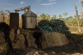 Здесь растёт эвкалипт, и местные жители, ободрав деревья, нехитрым способом добывают из листьев масло. Мы же эвкалипт использовали для костра — и горит жарко, и аромат замечательный. Вообще, эвкалипт здесь, пожалуй, единственная пригодная для растопки древесина, так как большая часть растительности это трубчатая гигантская трава, всевозможные бамбуки и тростники.