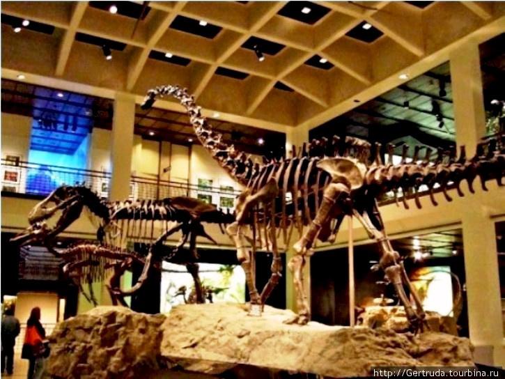 Скелеты динозавров.
