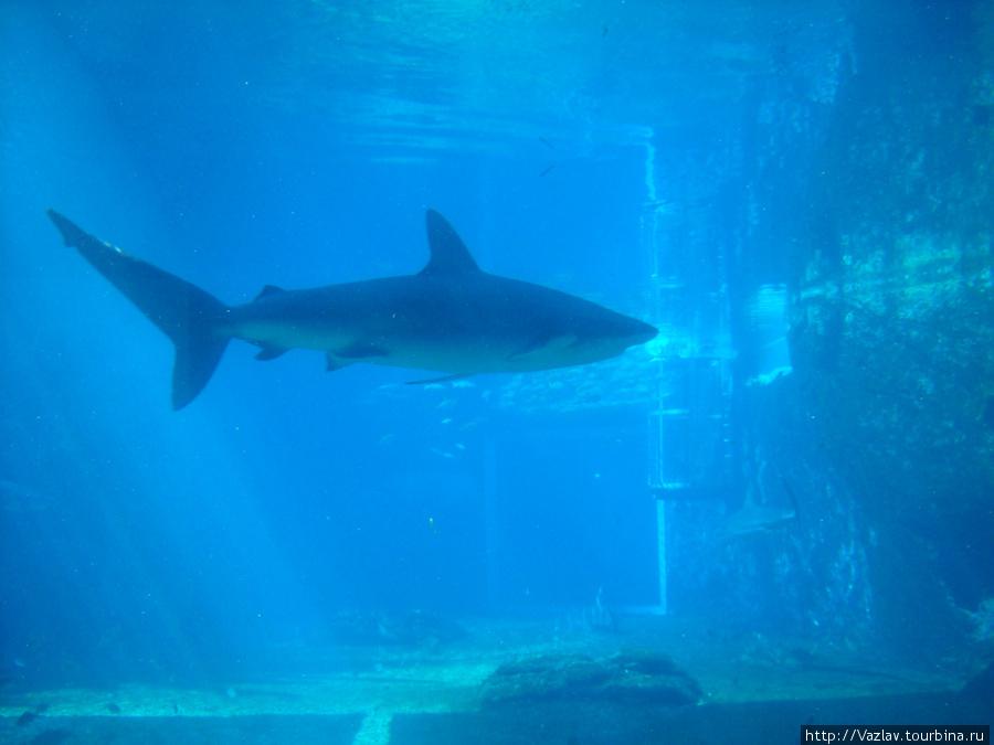 Ужасная акула