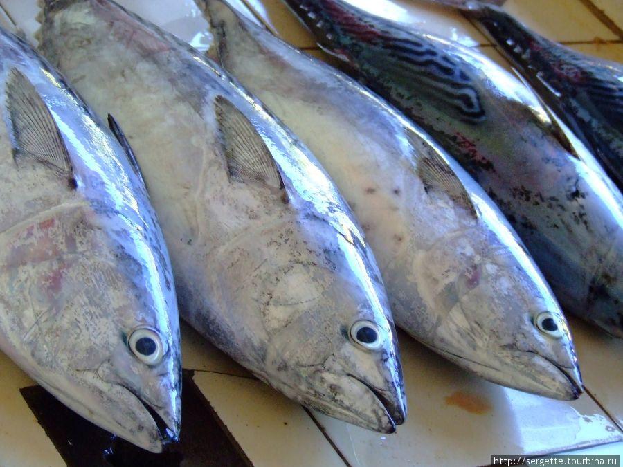 Однажды, соскучившись по нашей пище купили одну из этих рыбин и картошки. Целый вечер пировали с друзьями.