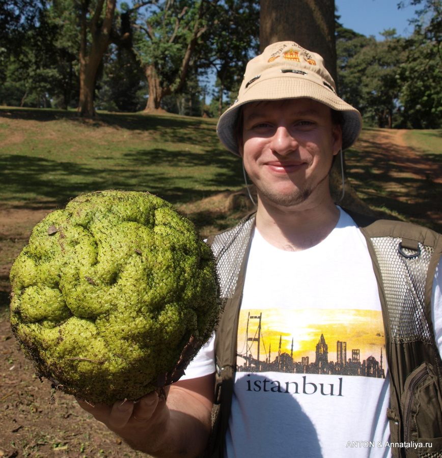 Антон с плодом хлебного дерева
