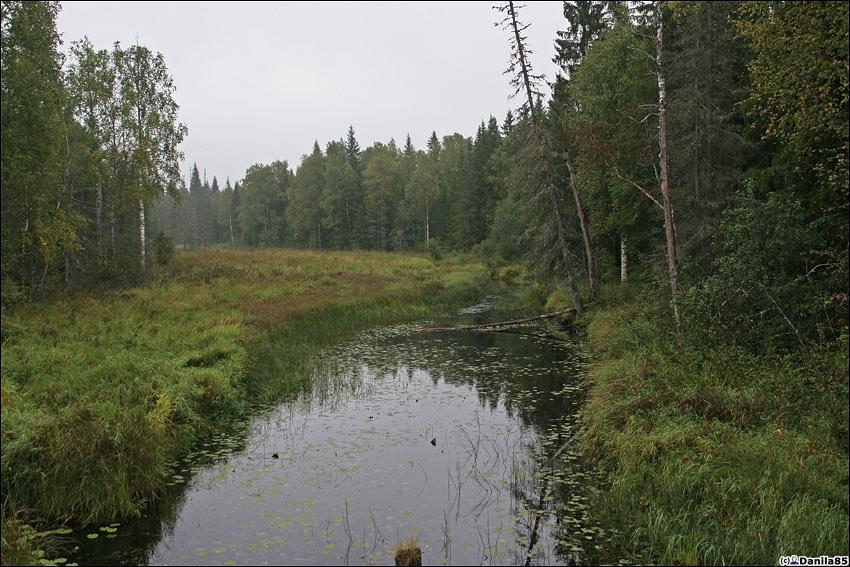 А вокруг красота болотная