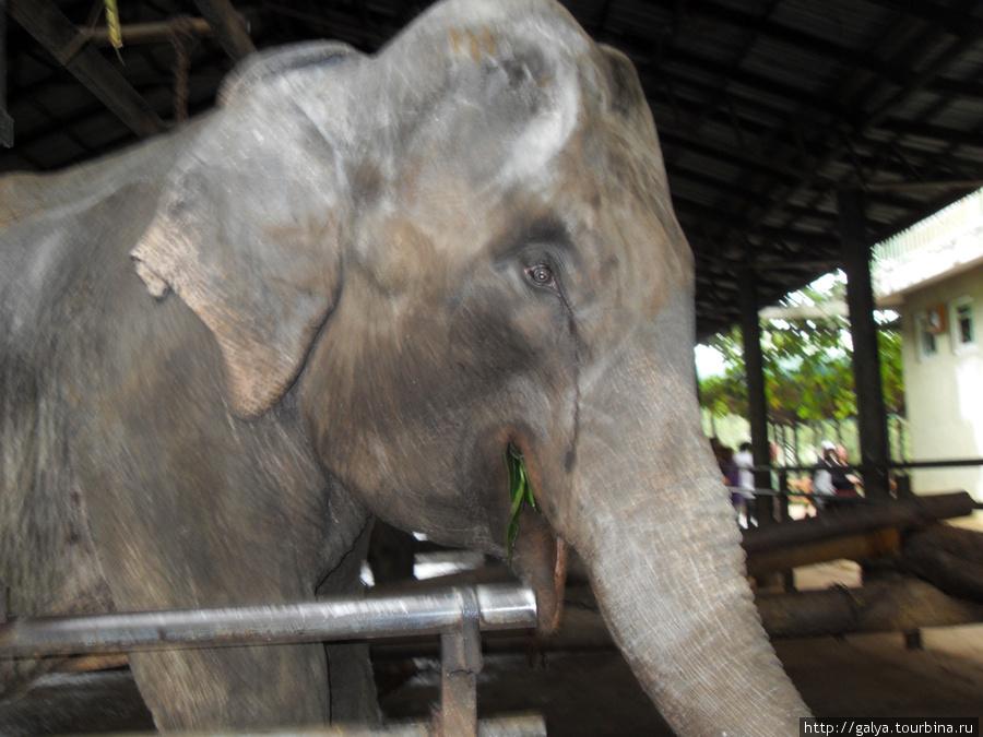 Старый грустный слон