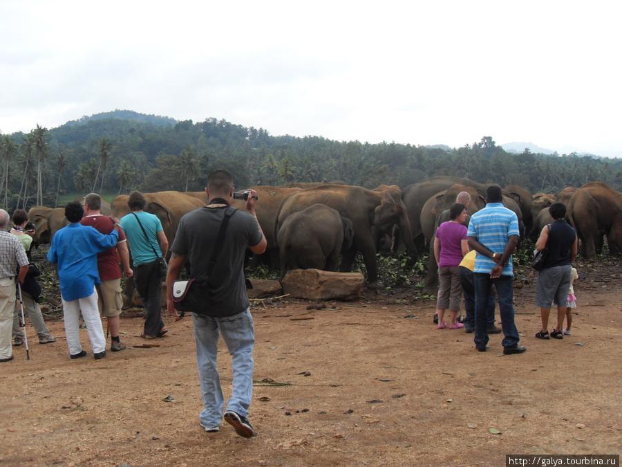 Народ и слоны