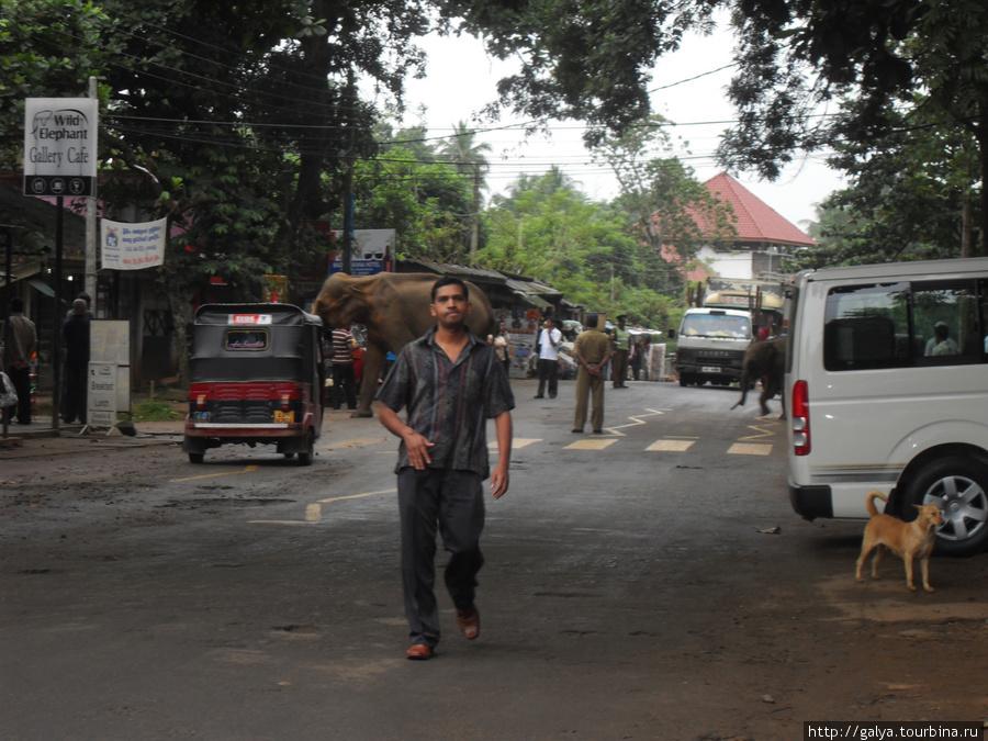 По улицам слонов водили