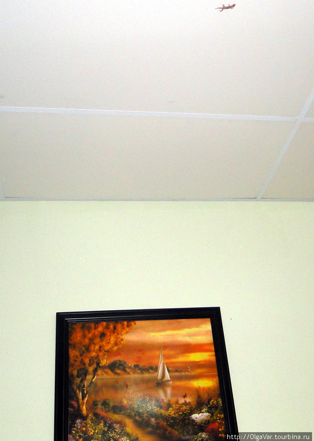 Кроме этого геккона на потолке, другие не попадались