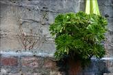 А за гурудварой на бетоне, истыканом осколками стекла растут такие растения.