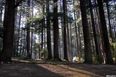 А сосновый лес отличный. За вход берут деньги (с индийцев, которые не полезут в дырку в заборе), поэтому там чисто.