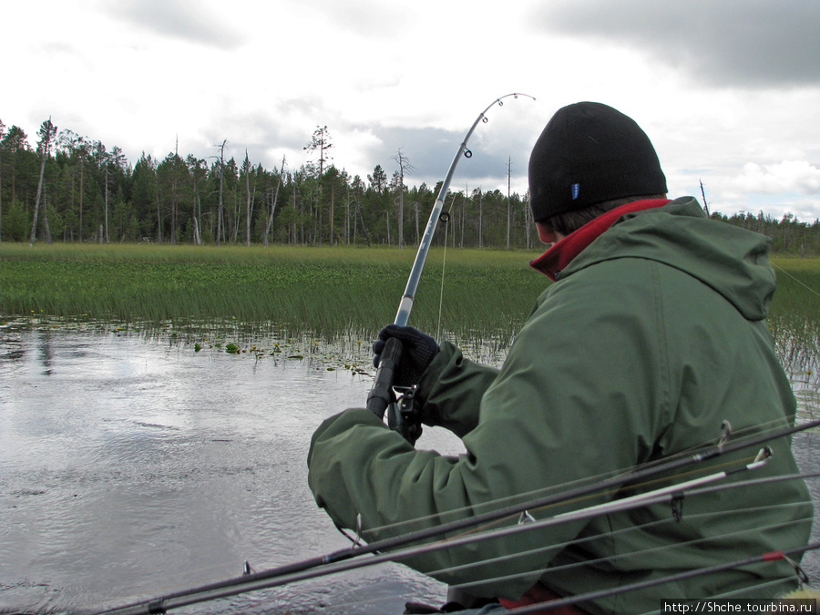 На тихой воде можно попробовать и щучку зацепить.
