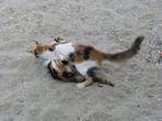 Кошки в Греции повсюду!
