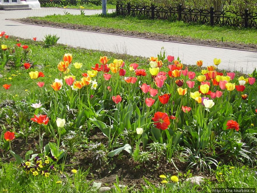 11.05.2008. Поездка на Толгу.  В стенах монастыря. Май, тюльпаны. Женская обитель :)
