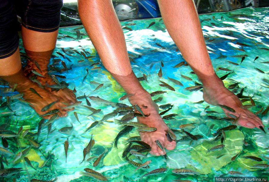 Рыбок в аквариуме очень м