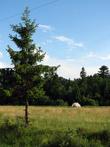 Сено часто сеют далеко от дома возле леса, ухода особого не требует — скоси вовремя, подсуши да вывези...