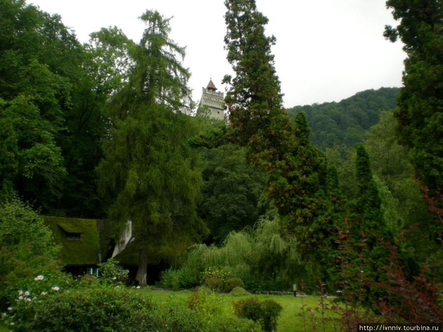 парк возле замка Бран