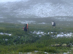 Такое редко бывает здесь, но бывает. На третий день ходьбы мы попали в снежную пургу. К ней мы готовы не были. Одеты были легко. Пришлось спуститься с гольцов к лесу где есть дрова. Пурга к вечеру закончилась и снег потаял. На утро вышли по остаткам снега и снова в гору.