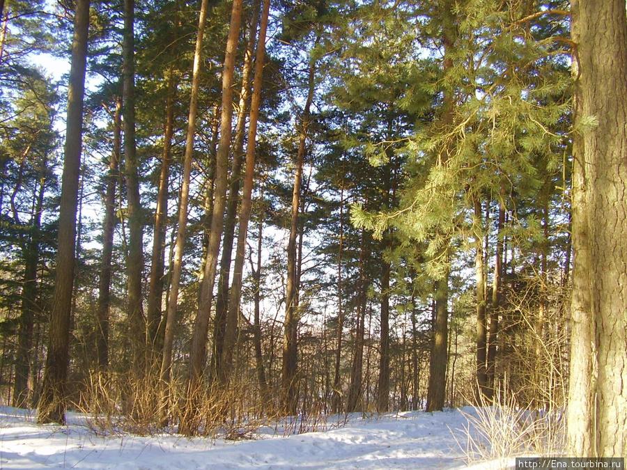 Беларусь — страна лесов :)