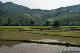 Рисовые поля Лаоса невелики, но удивительно зелены. Урожай риса собирают несколько раз в год, населенка неплотная, потому нет нужды, как в Китае, формировать терассы для рисовых плантаций в горах. О неспешности и лени лаосцев говорят: в Китае рис сажают, в Камбодже его собирают, а в Лаосе слушают, как рис растёт.