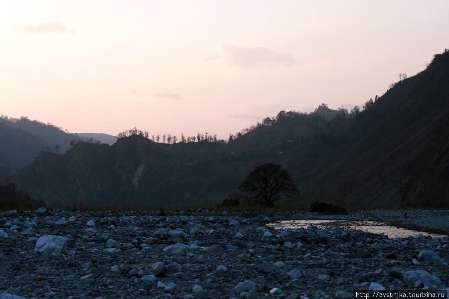 священное дерево на дне реки Халдвани, Индия