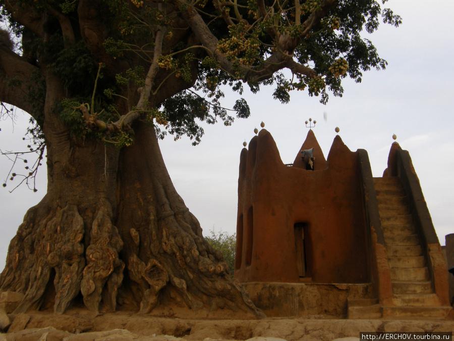 Старая мечеть и старое дерево.