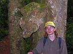 Этот вырост на дереве похож на голову диковинного зверя.