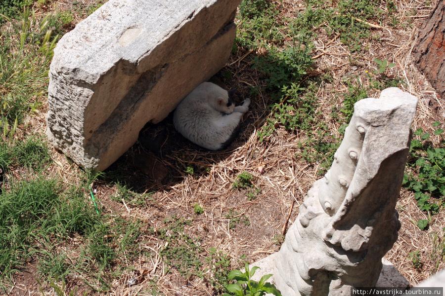кошки Рима живут не на ул