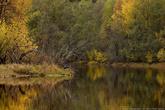 Река Гушкалка.