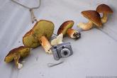 За пять минут пребывания на полуострове мне попались несколько белых грибов. Все они оказались нечервивыми и были с удовольствием съедены с картошкой на ужин. Для сравнения я положил рядом свой фотоаппарат (мыльница Canon A620 впритык помещается в кармане обычной рубашки). Самый верхний гриб в кадре растет на шляпке другого гриба. Первый раз (и единственный пока) видел такое в жизни, видимо в Карельском лесу бывает так много грибов, что встречаются и двухъярусные модификации.