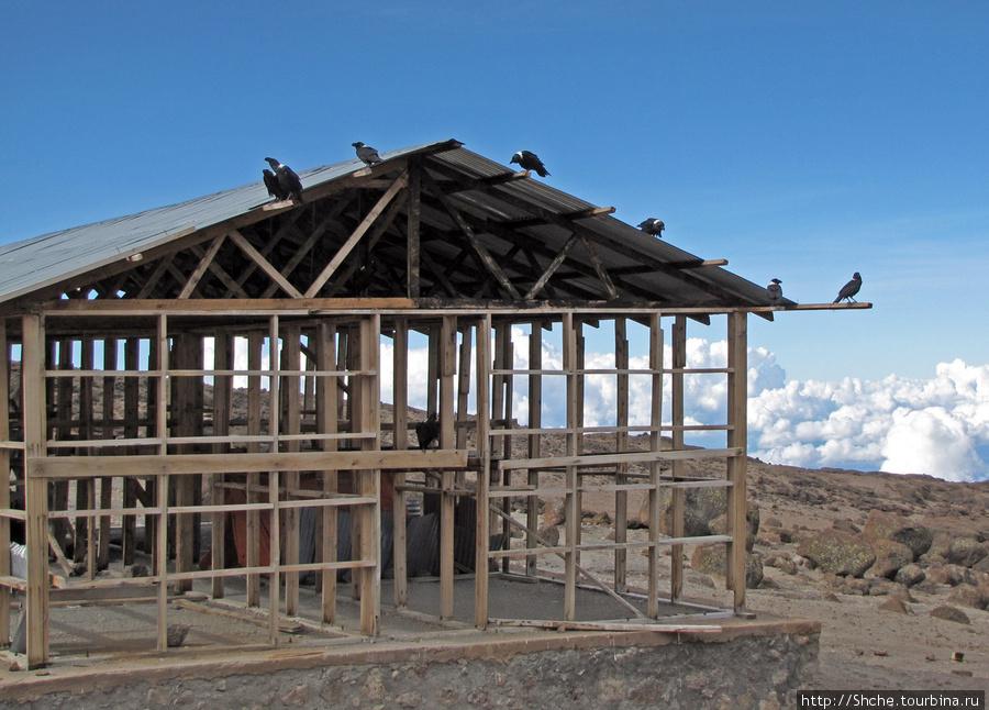В Kibo строится новый барак. А от воронов и тут спасу нет.