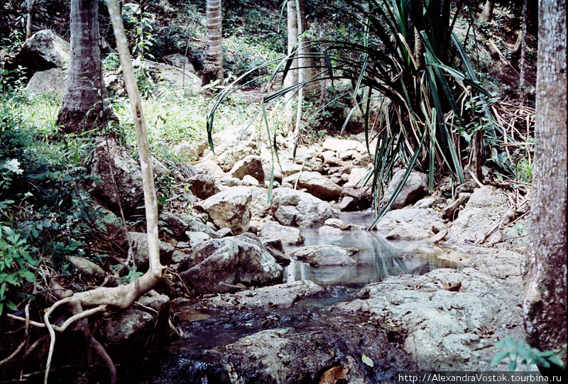 экскурсия в джунгли и на