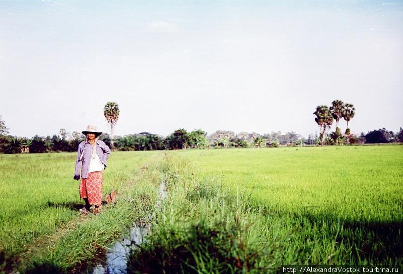 крестьянка в рисовом поле