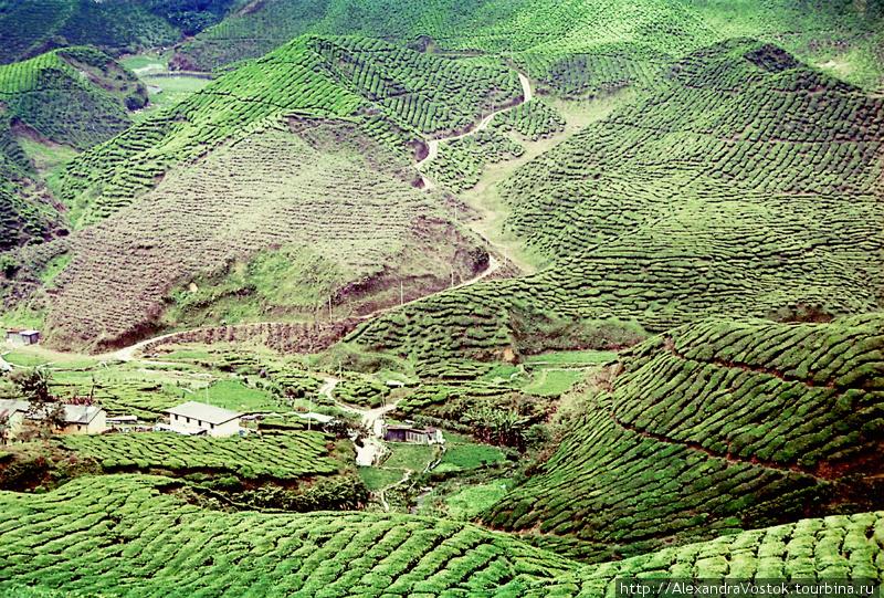 чайная деревня