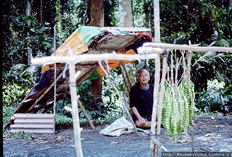 хитрый шаман из джунглей,