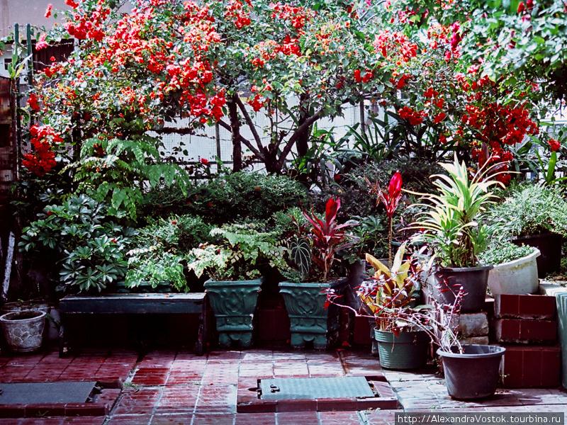 фэншуйный садик во дворе