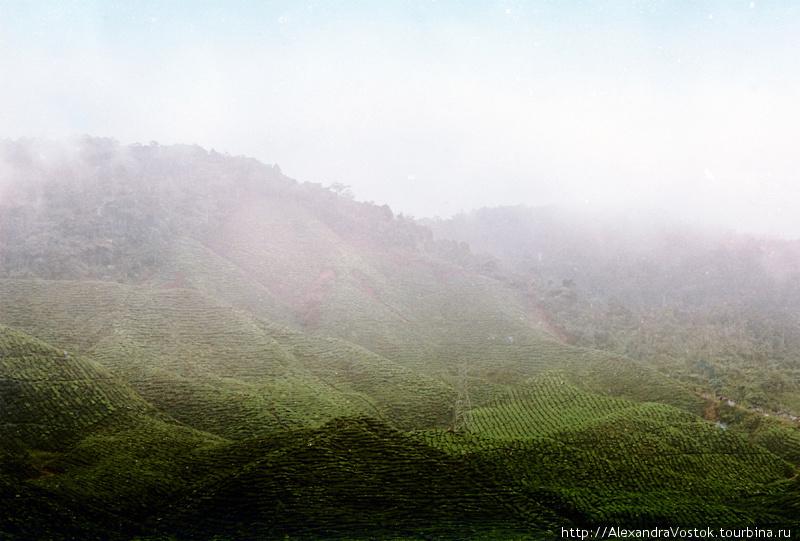 Чайные холмы и страшные истории Танах-Рата, Малайзия