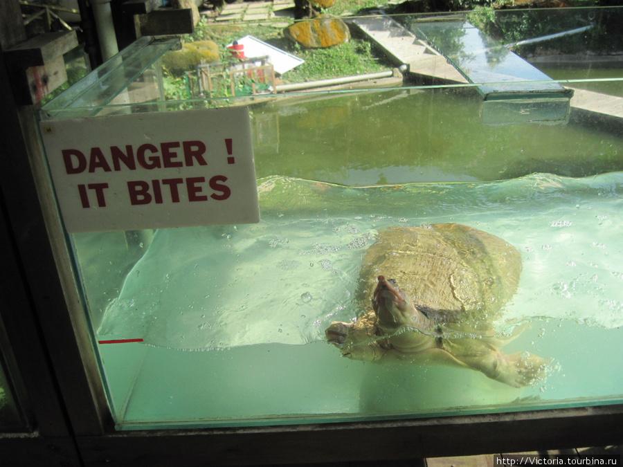 Эта черепаха так пыталась