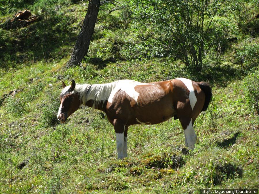Конь с коровы шкуру снял
