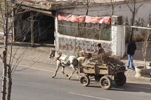 Не у всех есть машина... Гужевая повозка — тоже транспорт