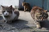 Женщина была сердобольная, и очень любила животных. Однажды она увидела у дверей прачечной пару кошек, и принесла им еды: сняла со своих бутердродов колбасу.