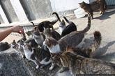 На следующее утро ее встречало у дверей уже в два раза больше кошек. Она второй раз отдала им свою колбасу, разломив кусочки пополам.