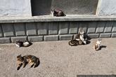 Впрочем, если вы окажетесь когда-нибудь в этом чудесном черноморском городе — сходите в гости к котам и принесите им колбаски. И пересчитайте, мне будет интересно узнать, как растет население Котограда.