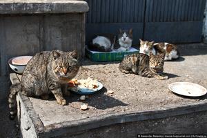 Скорее всего, по должности Леонид — мышелов, а по классификации значится как БДК: большой десантный кот.