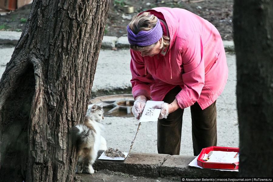 Крым — большая деревня, все друг друга знают, оказывается. И все окрестные кошки знают тетю ... (крымчане, напишите ее имя), которая каждый вечер кормит всех алуштинских котов.