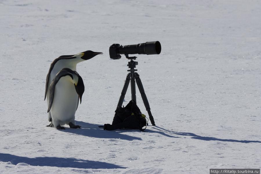 Антарктида — путешествие для для тех, кто не пищит!